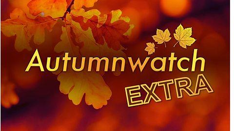 autumnwatch extra