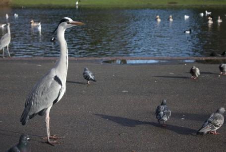 heron#