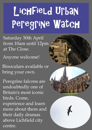 Peregrinewatch1